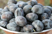 Prune-Plums-Custom-1024x682