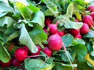 radish-cherry-belle-300x225