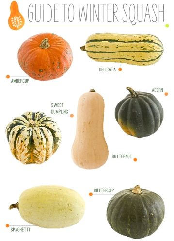 guide_to_winter_squash