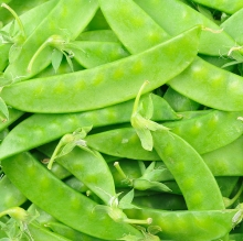Peas-snow1crop