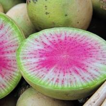 watermelonradishcrop