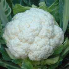 cauliflowercrop