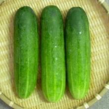 cucumberscrop