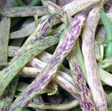 mixed beanscrop