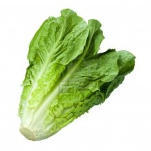 romaine-lettucecrop