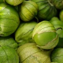 tomatilloscrop