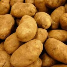 russet-potatoes