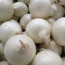 White-Onion
