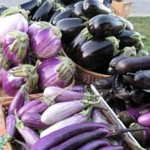 eggplant-varieties