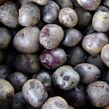 blue_potatoes_organic