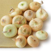 cipollini-onions