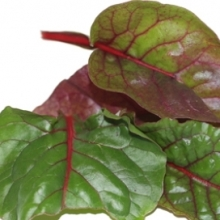Baby Red Swiss Chard