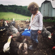 Farm girl Evelyn feeding the hens.