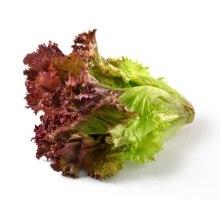 lettuce_red_leaf