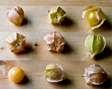 ground_cherries