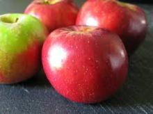 mcintosh_apples