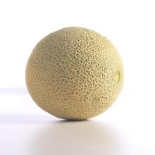 Cantaloupe-Beauty_2174_1
